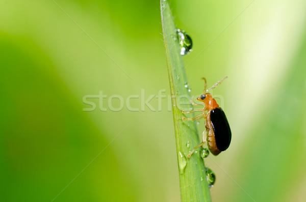Laranja besouro verde natureza jardim primavera Foto stock © sweetcrisis