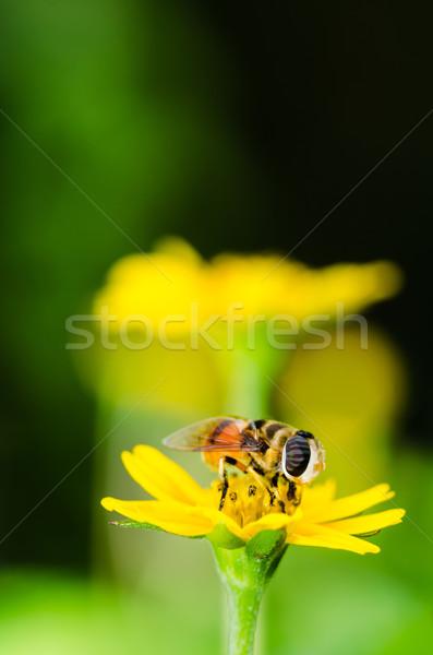 Vruchten bestanden bloem macro groene natuur Stockfoto © sweetcrisis