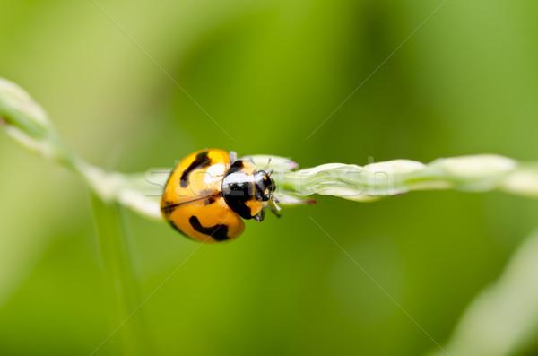 Narancs bogár zöld természet zöld levél szépség Stock fotó © sweetcrisis