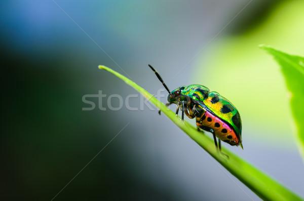 Gioiello bug verde natura giardino estate Foto d'archivio © sweetcrisis