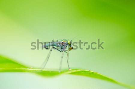 Moustiques nature maison feuille Homme insecte Photo stock © sweetcrisis