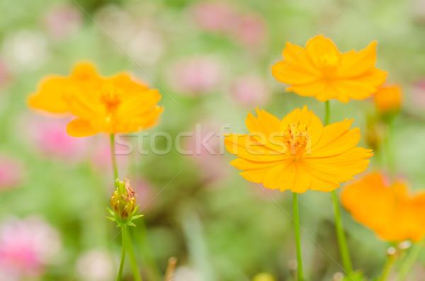 花 黄色 庭園 自然 公園 草 ストックフォト © sweetcrisis