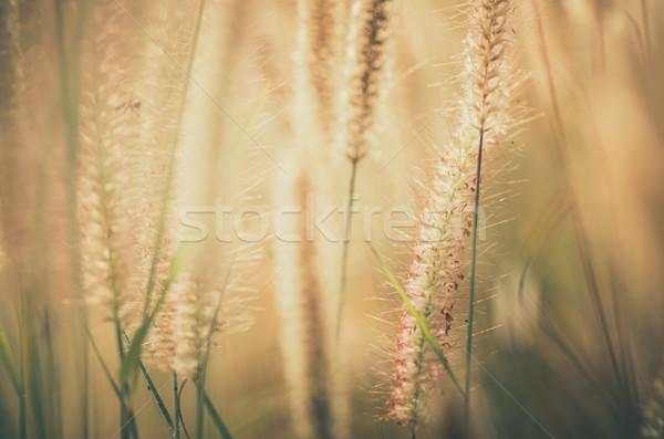 карлик трава Vintage сорняков растений цветы Сток-фото © sweetcrisis