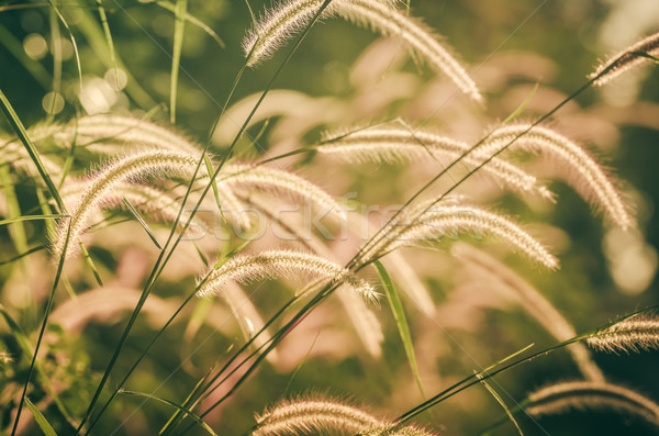Nano erba vintage weed impianti fiori Foto d'archivio © sweetcrisis