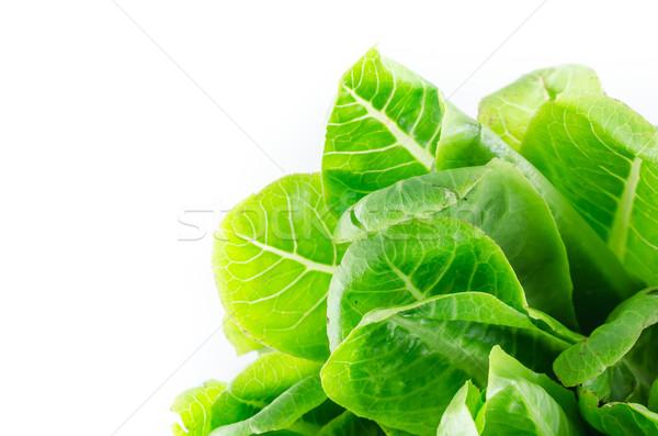 Green cos salad Stock photo © sweetcrisis