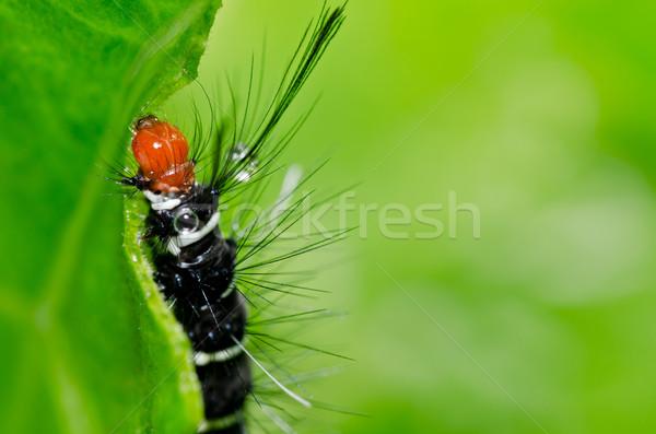 червя саду зеленый природы лес продовольствие Сток-фото © sweetcrisis