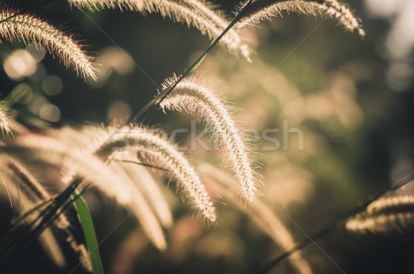 Enano hierba vintage malezas plantas flores Foto stock © sweetcrisis