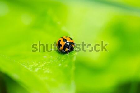 Katicabogár zöld természet kert tavasz szem Stock fotó © sweetcrisis