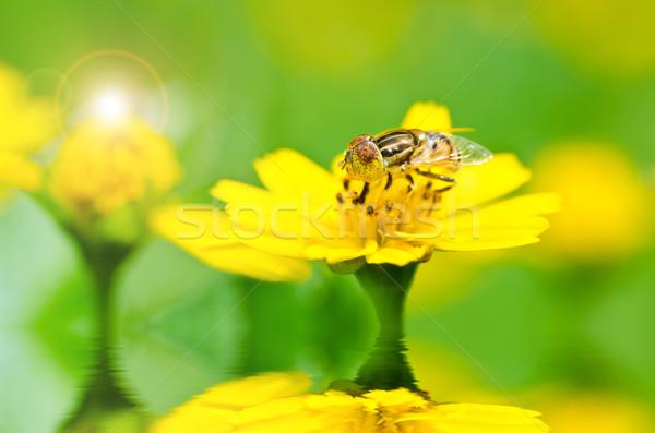 ストックフォト: フルーツ · ファイル · 花 · 緑 · 自然