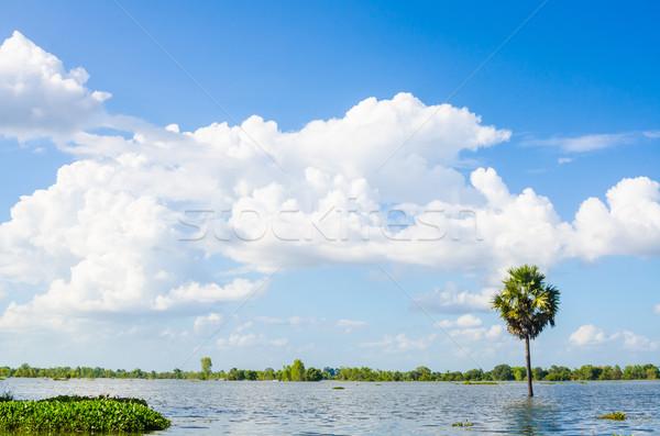 ツリー 青空 タイ 水 支店 環境 ストックフォト © sweetcrisis