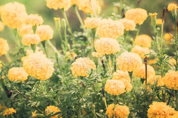 Stok fotoğraf: çiçek · bağbozumu · doğa · bahçe · düğün · kafa