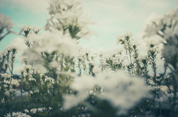 花 ヴィンテージ 庭園 自然 ストックフォト © sweetcrisis