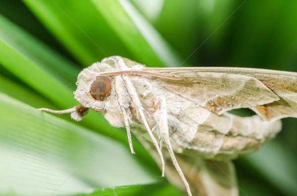 Natureza ambiente verde noite voar branco Foto stock © sweetcrisis