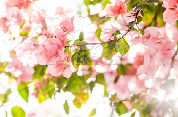 紙 花 庭園 自然 公園 春 ストックフォト © sweetcrisis