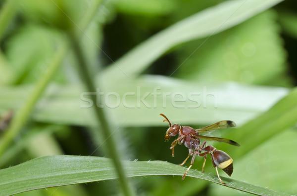 Rosolare vespa verde natura giardino oro Foto d'archivio © sweetcrisis