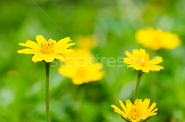 Stock photo: little yellow star in green nature