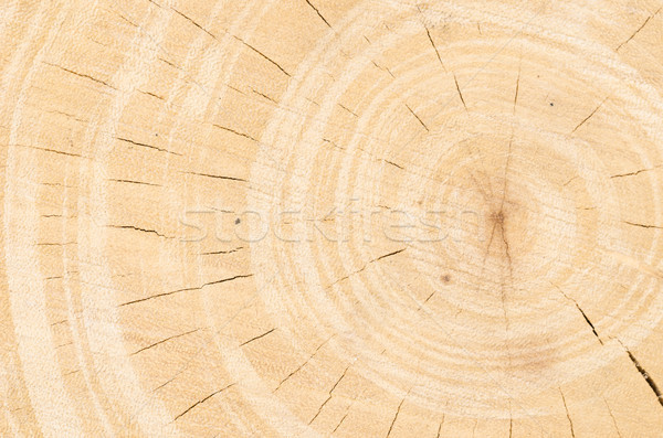 Tree stump background in the nature Stock photo © sweetcrisis