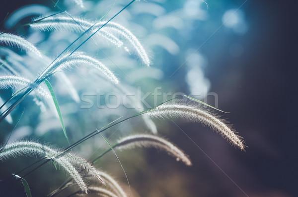 Anão grama vintage erva daninha plantas flores Foto stock © sweetcrisis