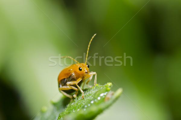 Oranje kever groene natuur tuin voorjaar Stockfoto © sweetcrisis