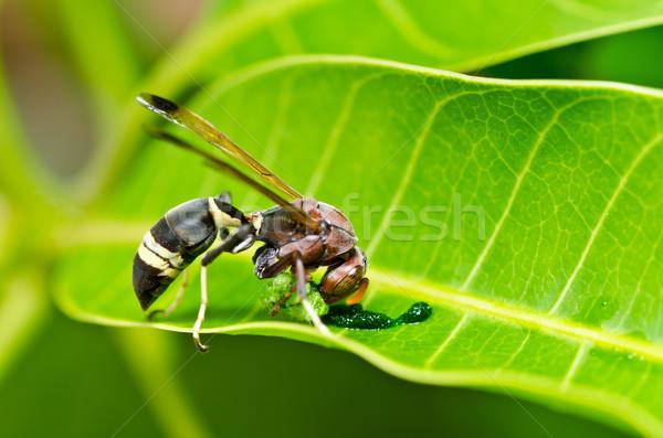 Wesp groene natuur tuin bee Geel Stockfoto © sweetcrisis