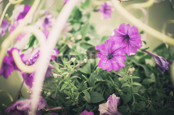 Vintage jardim natureza parque folha verão Foto stock © sweetcrisis