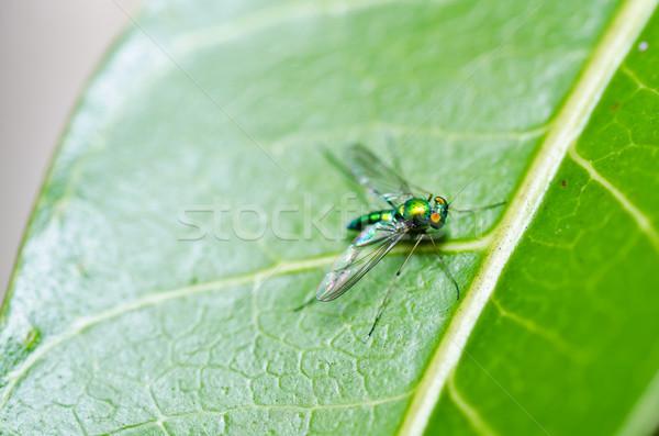 Uzun bacaklar uçmak yeşil doğa şehir ev Stok fotoğraf © sweetcrisis