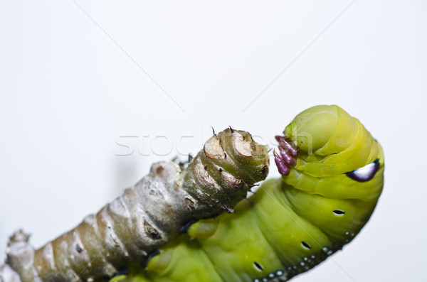 worm in green nature Stock photo © sweetcrisis