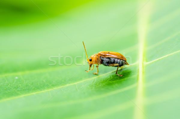 オレンジ カブトムシ 緑 自然 庭園 春 ストックフォト © sweetcrisis