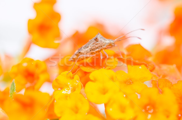 желтый цветок зеленый природы цветок жизни Сток-фото © sweetcrisis