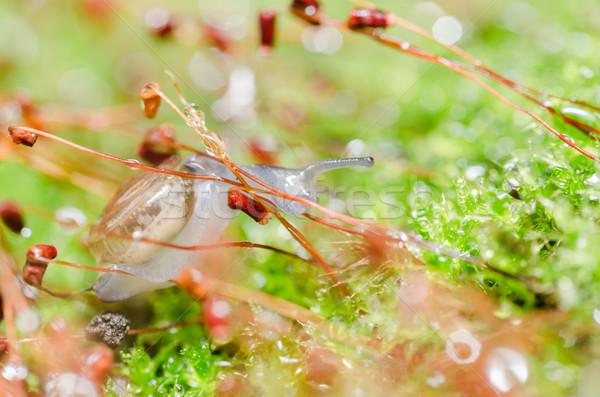 Mech makro shot ogród lasu wody Zdjęcia stock © sweetcrisis