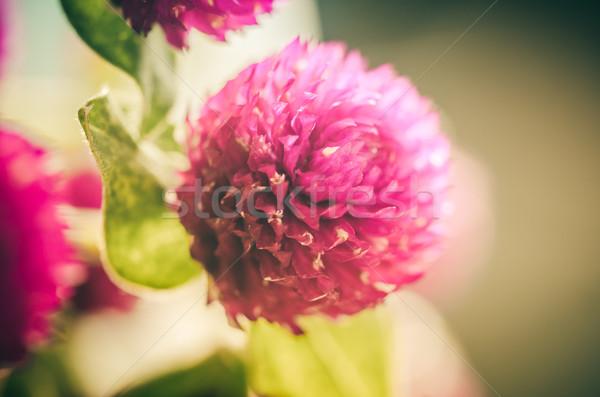 Wereldbol vrijgezel knop bloem vintage kleur Stockfoto © sweetcrisis