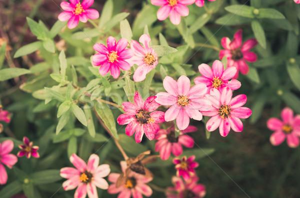 花 ヴィンテージ 緑 庭園 自然 公園 ストックフォト © sweetcrisis