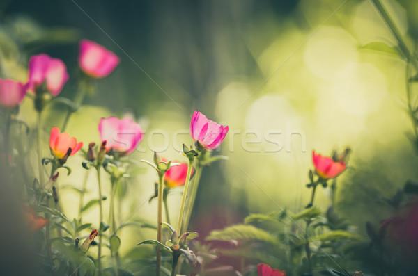 ヴィンテージ 自然 庭園 美 ストックフォト © sweetcrisis