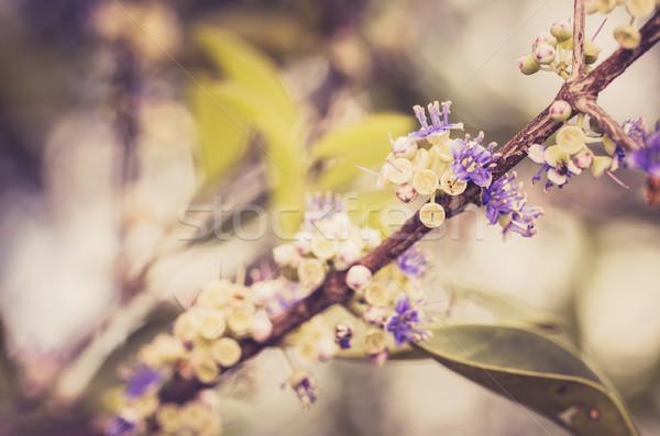 花 ヴィンテージ 自然 公園 ストックフォト © sweetcrisis