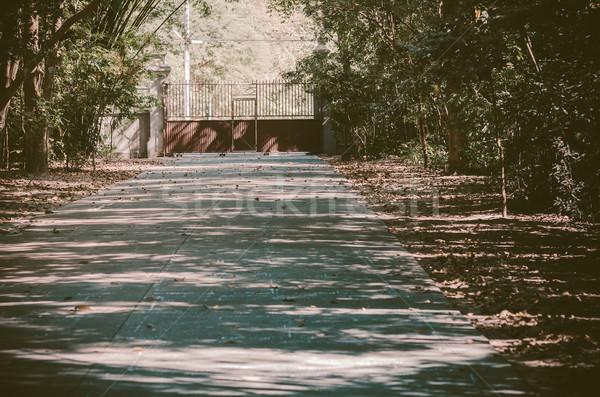 Vasaló ajtó park kicsi erdő fa Stock fotó © sweetcrisis