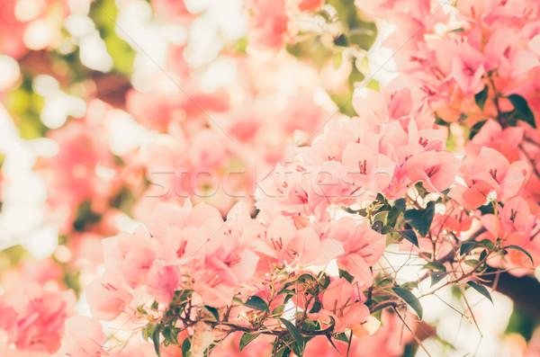 Papel flores vintage jardim natureza parque Foto stock © sweetcrisis