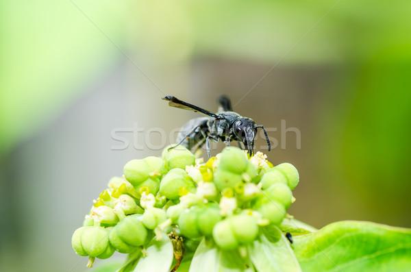 ワスプ 緑 自然 庭園 蜂 白 ストックフォト © sweetcrisis