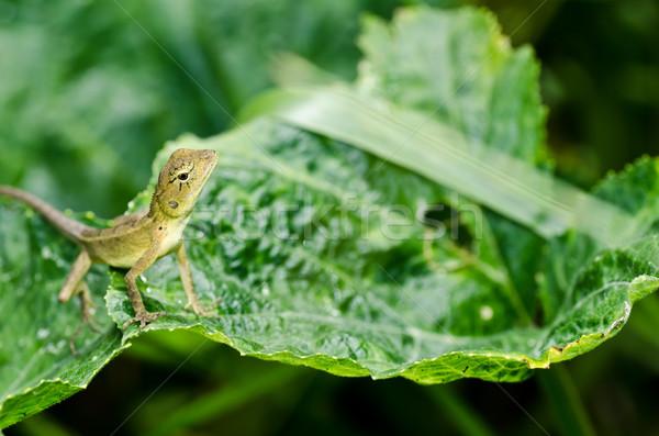 Stock photo: Lizard in green nature