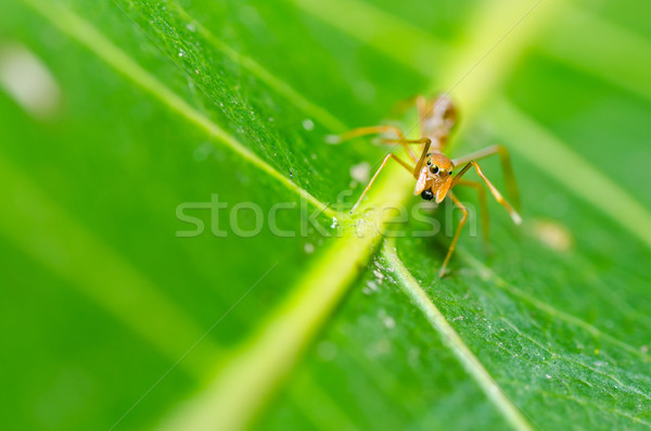 red spider in nature Stock photo © sweetcrisis