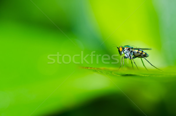 Hosszú lábak légy zöld természet város ház Stock fotó © sweetcrisis