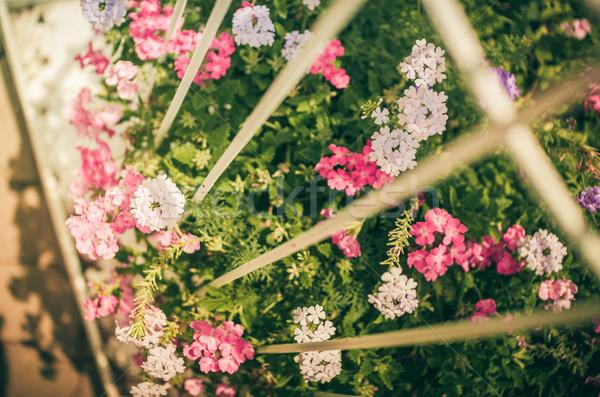 Vad kicsi virág klasszikus virágoskert természet Stock fotó © sweetcrisis