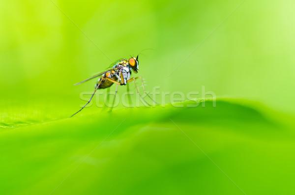Hosszú lábak pók zöld természet kert tavasz Stock fotó © sweetcrisis
