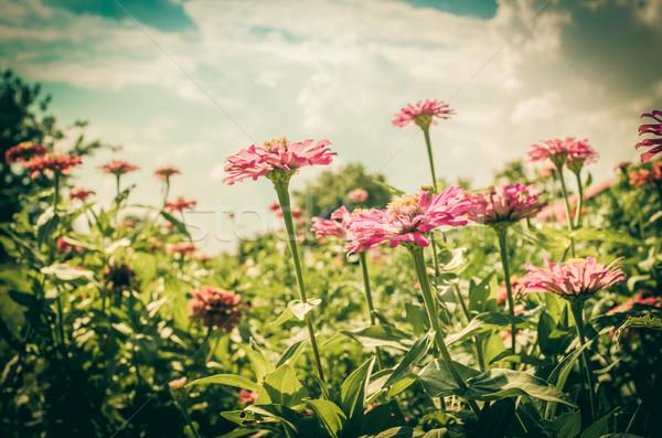Flor blue sky vintage jardim natureza parque Foto stock © sweetcrisis