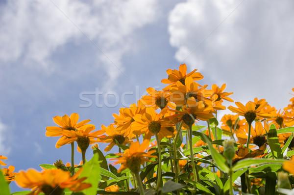 Virágok kert természet park virág szépség Stock fotó © sweetcrisis