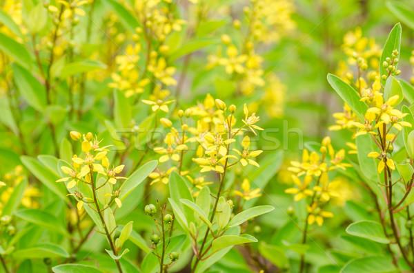 黄色の花 小 庭園 自然 公園 葉 ストックフォト © sweetcrisis