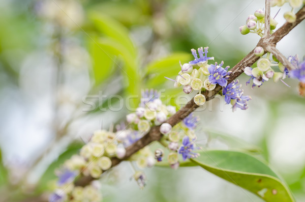 花 自然 公園 タイ ストックフォト © sweetcrisis