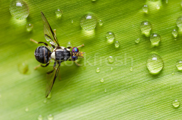 Hover files in the nature Stock photo © sweetcrisis