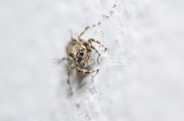 Spider стены природы макроса выстрел страхом Сток-фото © sweetcrisis