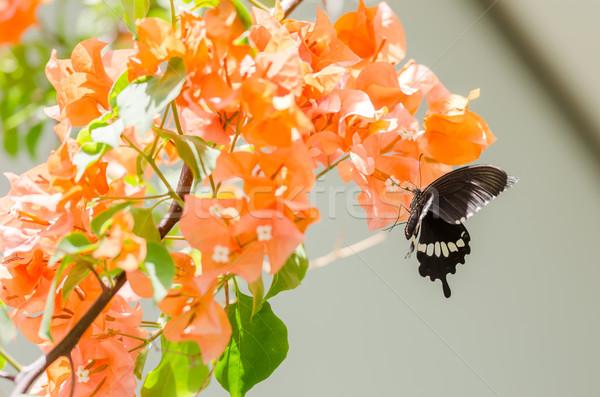 Papel flores borboleta jardim natureza parque Foto stock © sweetcrisis