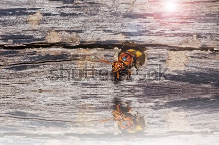 Vespa verde natura giardino ape giallo Foto d'archivio © sweetcrisis